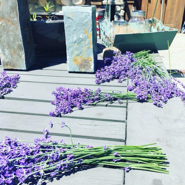 lavender cut